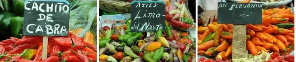 Historia de la cocina moderna gastrobierzo for Historia de la cocina moderna